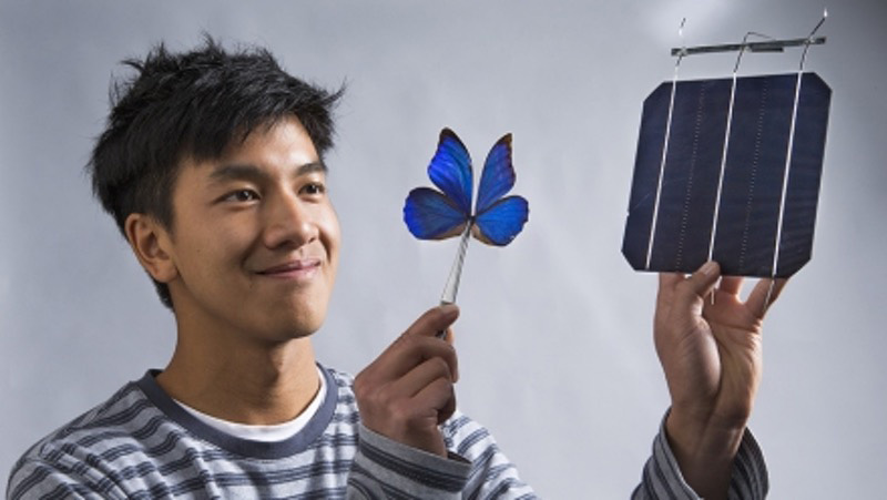 Butterfly wings inspire new solar technologies