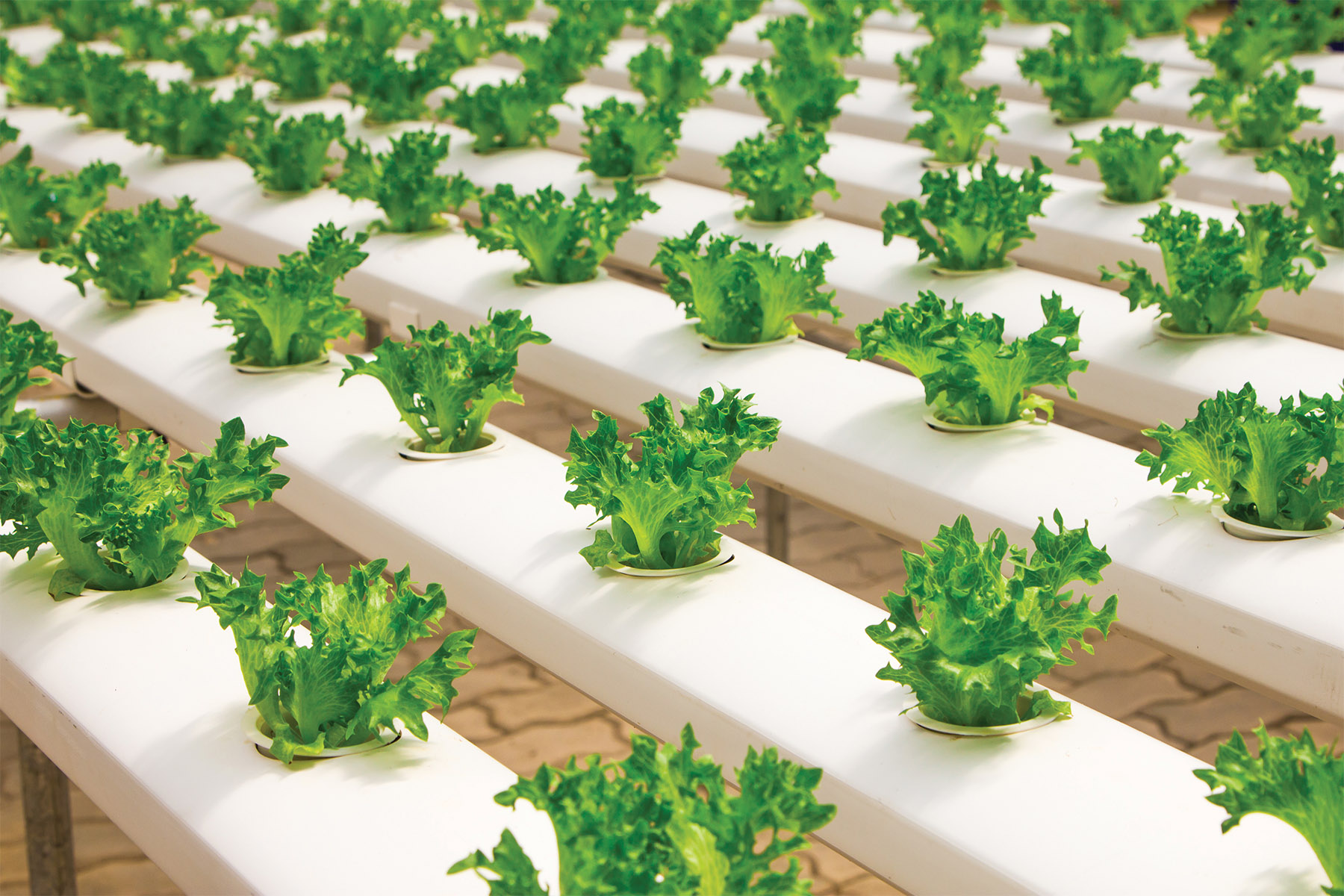 Horticultural Series LEDs Deliver Entire Spectrum from UV-C to Far-Red