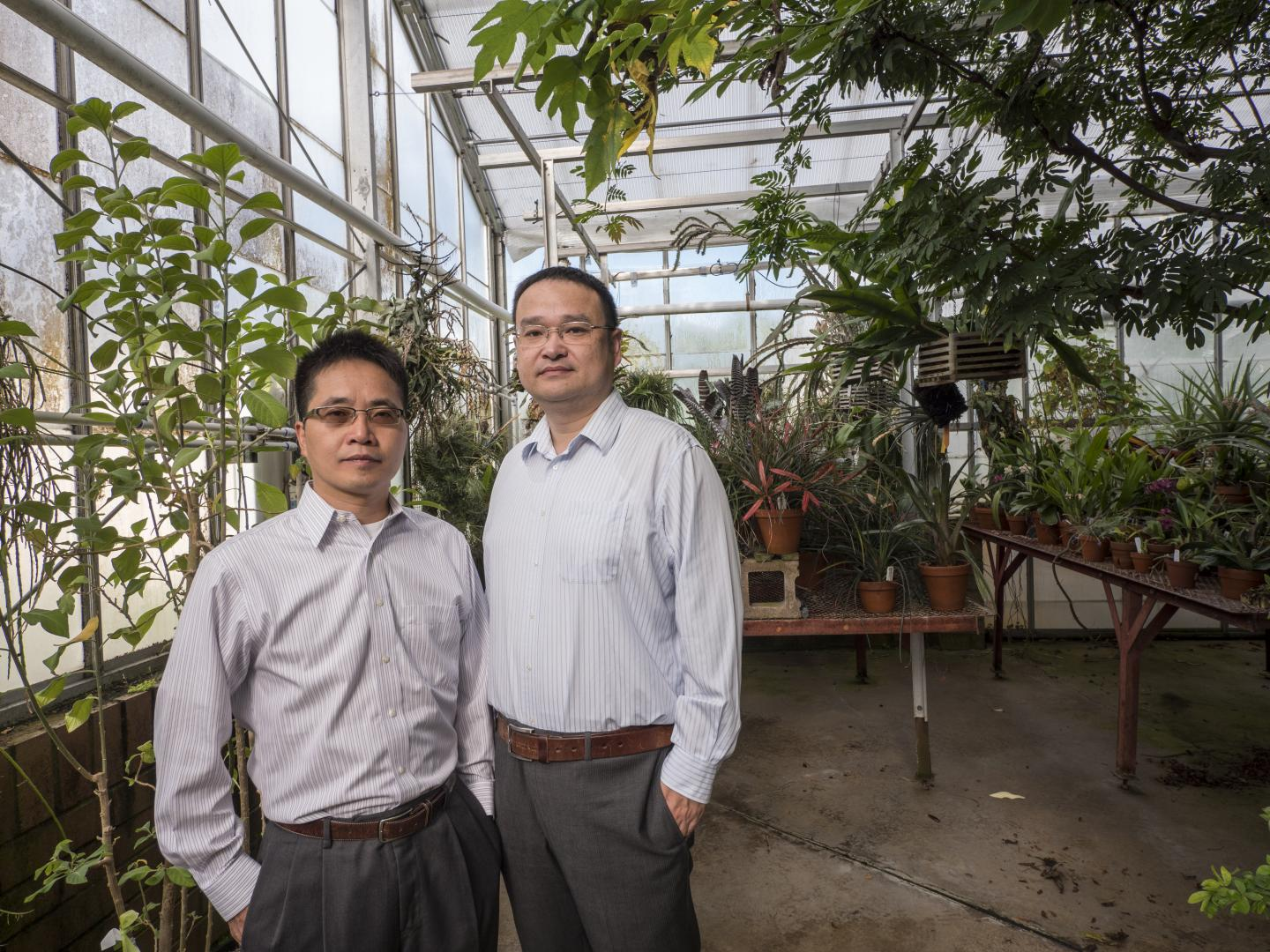 Light-Splitting Greenhouse Film Could Improve Photosynthetic Efficiency