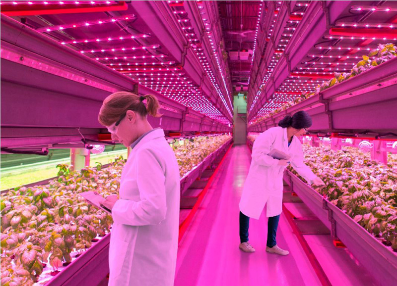 Horticulture Lighting Drives Plant Growth