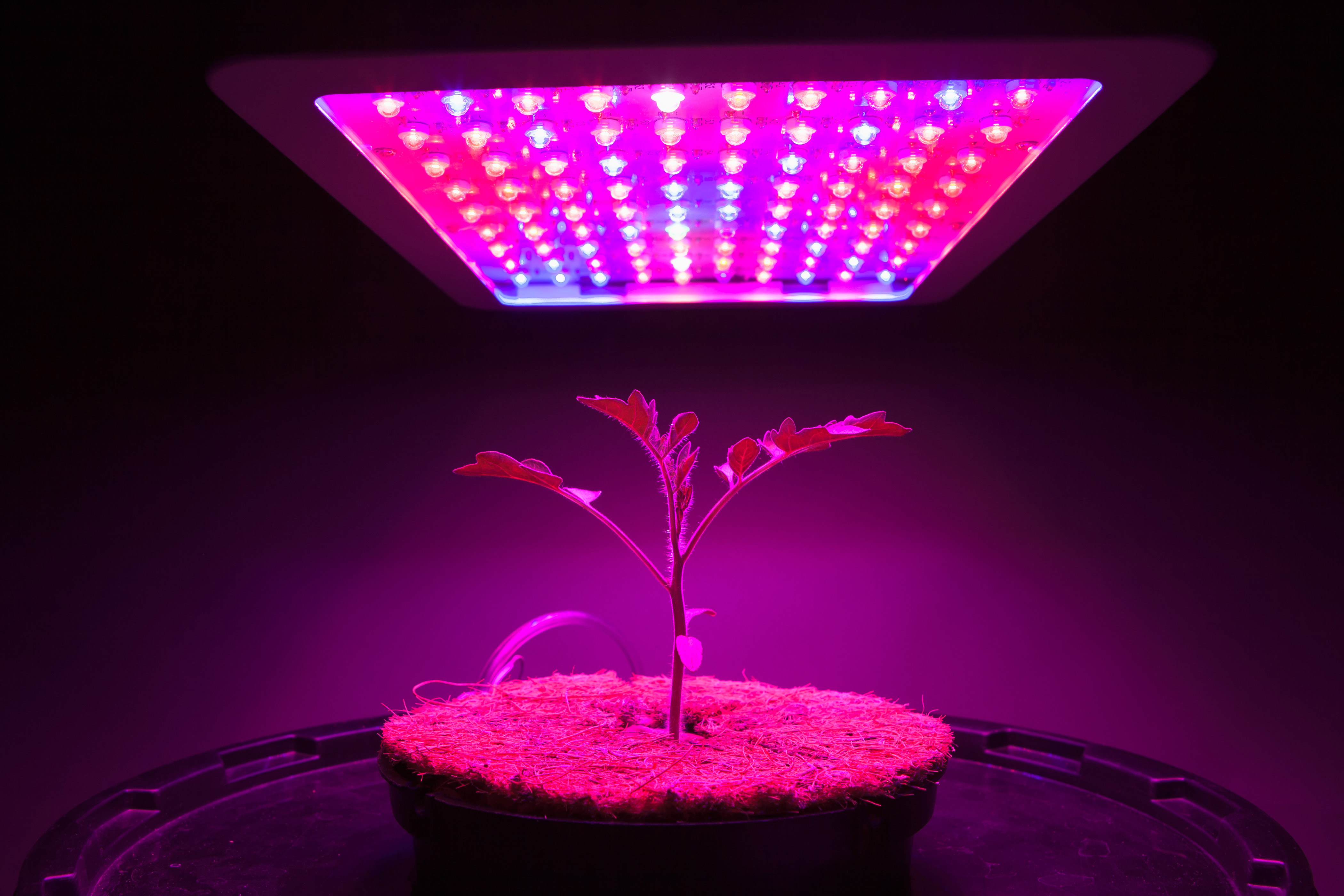 Mouser's Horticulture Site Focuses on LEDs, Sensors, IoT